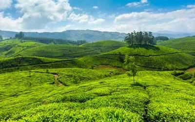 Tour Packages : Madurai, Thekkady, Munnar Packages