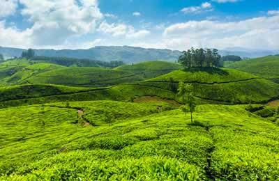 Tour Packages : Madurai-Thekkady-Munnar